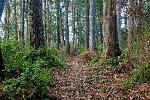Kaikoura Trail, all rideable
